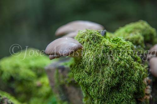 Parque Natural de #Gorbeia #DePaseoConLarri #Flickr      -1365