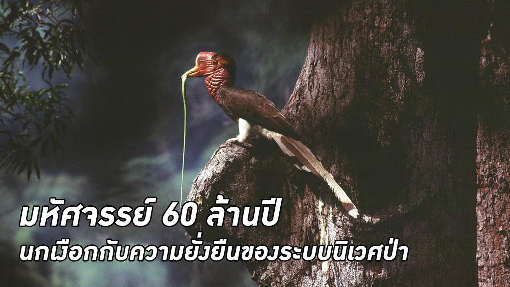 นกเงือก