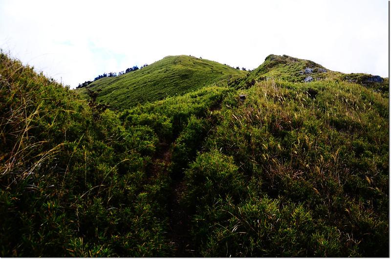 合歡山南峰登山步道