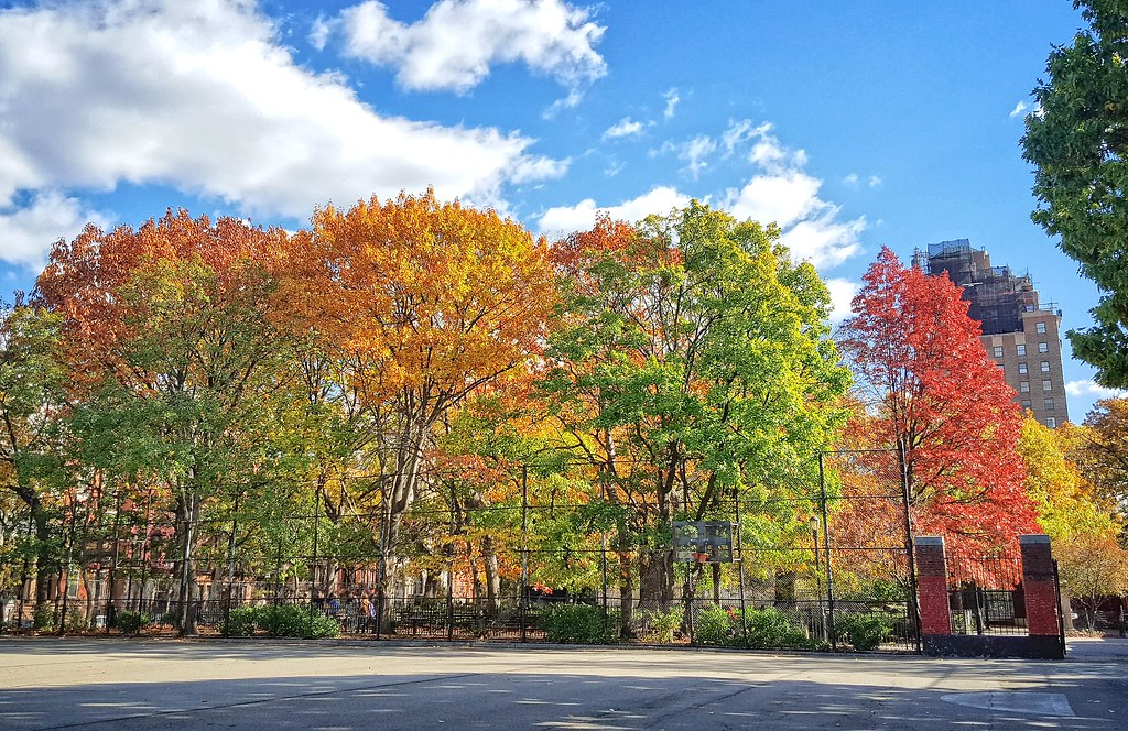 Fall foliage in Tompkins Square