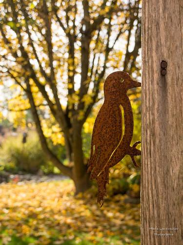 Herbstlicher Gartenblick