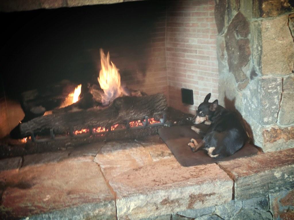 Sweet Doggie at Heitz Cellar