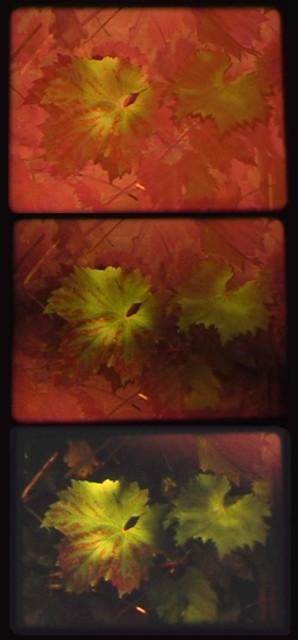 Lynn_AutumnFog