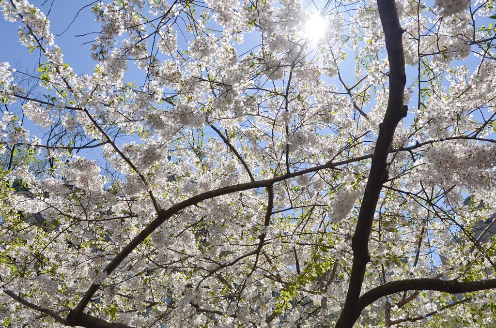 Le printemps à Central Park