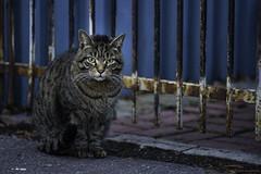 Sceptic Cat