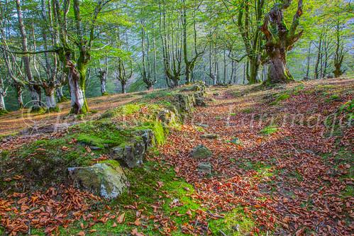 Parque Natural de #Gorbeia #DePaseoConLarri #Flickr      -1360