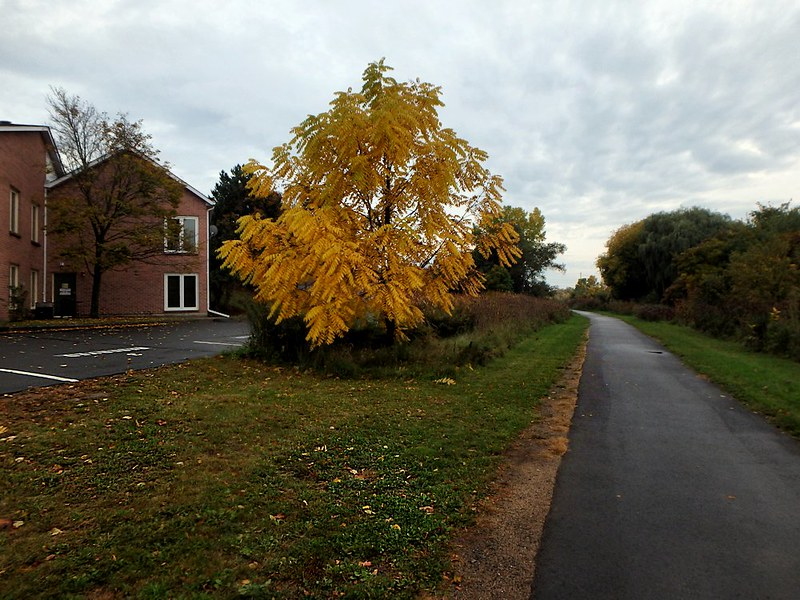 Project 366, Day 303: A Vibrant Path