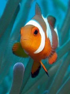 "<img src=""padi-diving-courses-emmanuelle-and-mathieu-tioman-island-malaysia.jpg"" alt=""PADI diving courses, Emmanuelle and Mathieu, Tioman Island, Malaysia"" />"