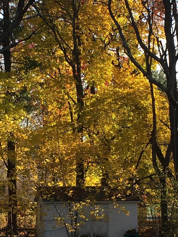 Bright November