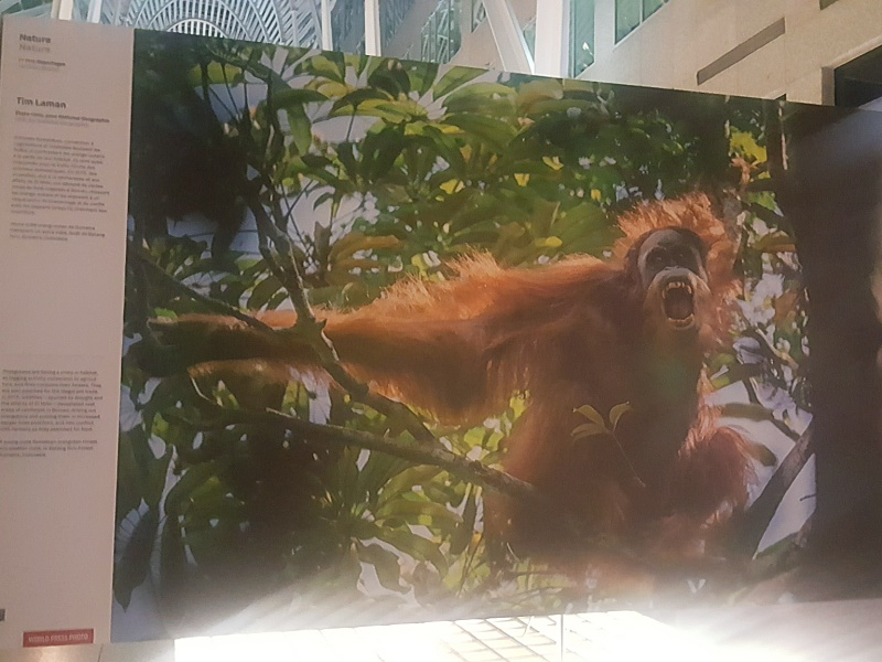 World Press Photo 2016 orangutan