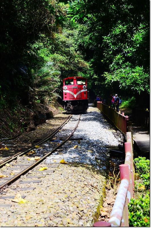 阿里山森林火車 5