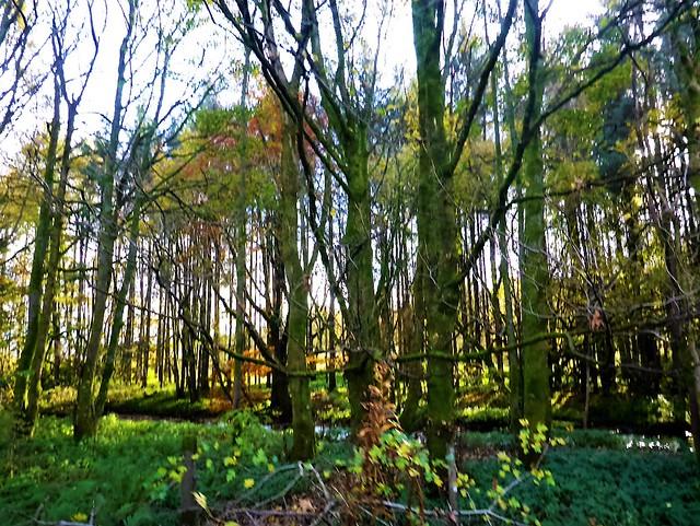 Trees in autumn, Strathblane Valley