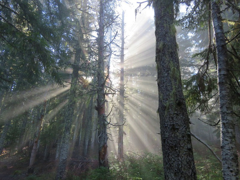 Sunrays in the Mt. Hood Wilderness