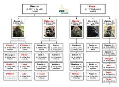 Gorilla: Massa & Boma (2011)