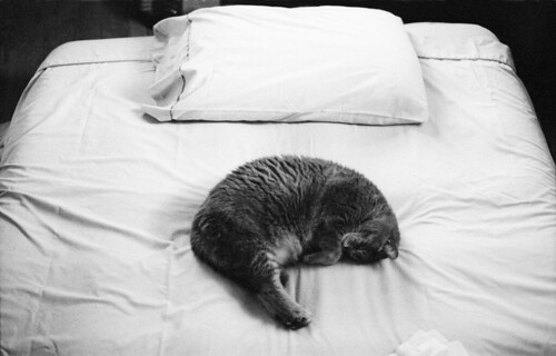 kitty sleeps | by john hanson.