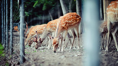Deer Park.
