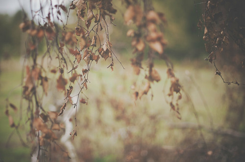 Autumn | by Paisley patches