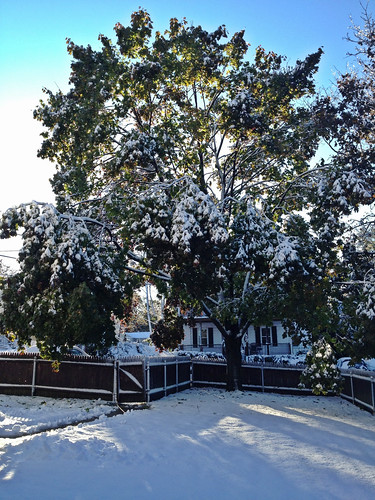 October 30 - winter comes early | by Tracey's Culinary Adventures