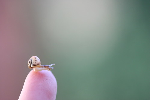 Tiny snail | by Bumble-bee-love