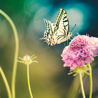 We delight in the beauty of the butterfly, but rarely admit the changes it has gone through to achieve that beauty. | by www.juliadavilalampe.com