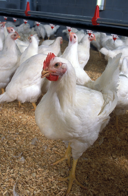 Poultry Classes Blog photo