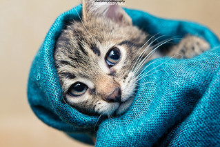 kittens | by WWW.FOTOMOMENTS.RU