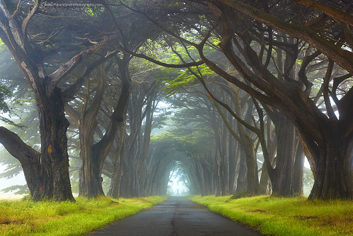 Myst - Point Reyes National Seashore, California | by PatrickSmithPhotography