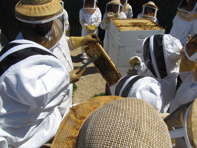 Learning about the honey bees