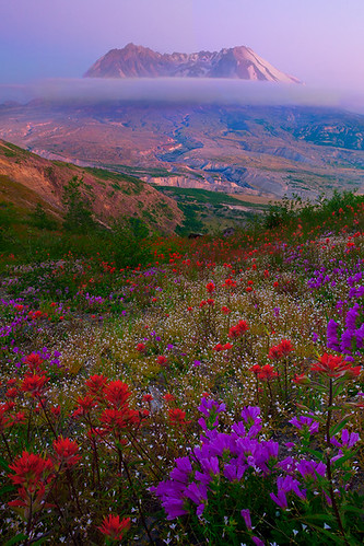 Mount St Helens Wildflowers | by kevin mcneal