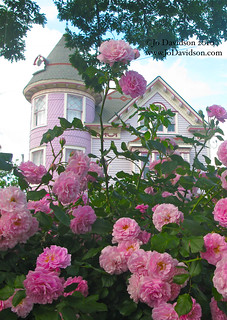 Pink Roses in front of Victorian Home | by JoDavidson1