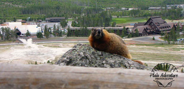 Marmot at Observation Point