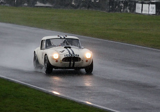 Wet Cobra | by autoidiodyssey