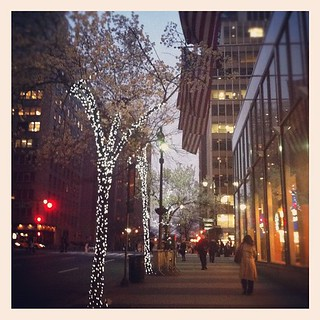 Holiday lights and blossoms are agreeable to me | by pixietart