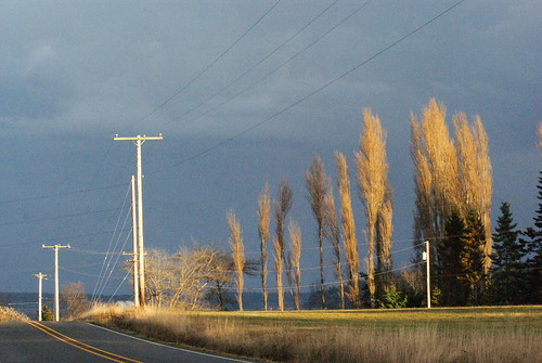 Light, Whidbey Island, Jan. 18, 2012 | by Erik Larson Author