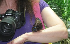 Blue Morph Butterfly on my arm =)