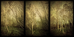 Trio of Trees by Child of Danu