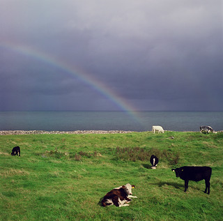the cow at the end of the rainbow | by manyfires