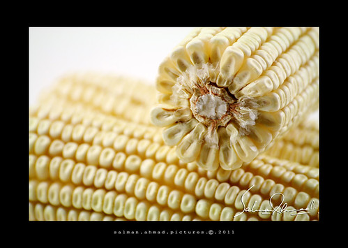 White Corn. Are you? | by ssaallmmaann