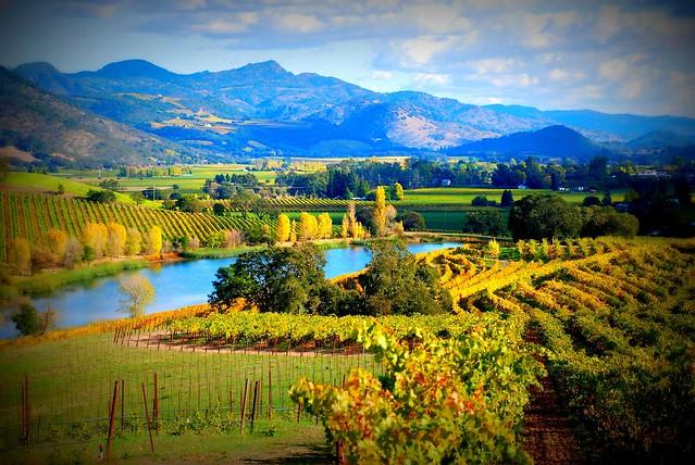 Napa Valley Views
