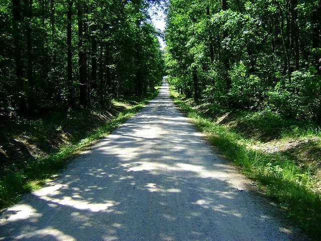 """początek leśną """"autostradą"""""""