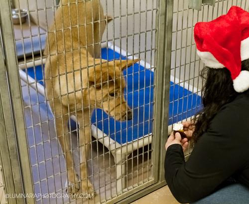 Teh Barkers Dozen Dog Treats