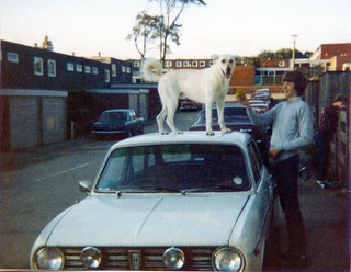 A dog on the roof of our old car :) | by Buena Suerte :D