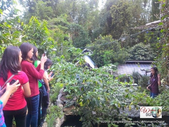 LivingMarjorney-Jaya-Secret-Garden-015