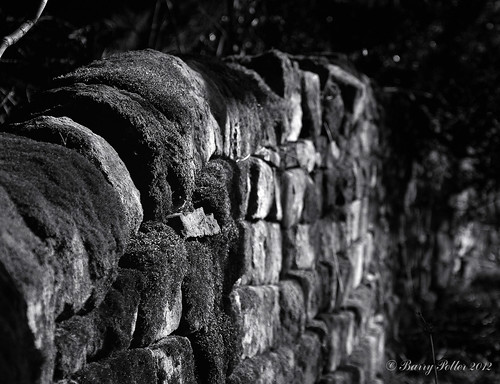 mossy wall (revisited in B & W) | by Barry Potter (EdenMedia)