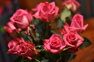 Pink Roses 004 | by Michael Kappel