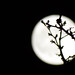 Nature - May full moon-33
