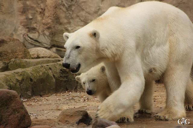 Besuch Zoo am Meer 25.06.201620