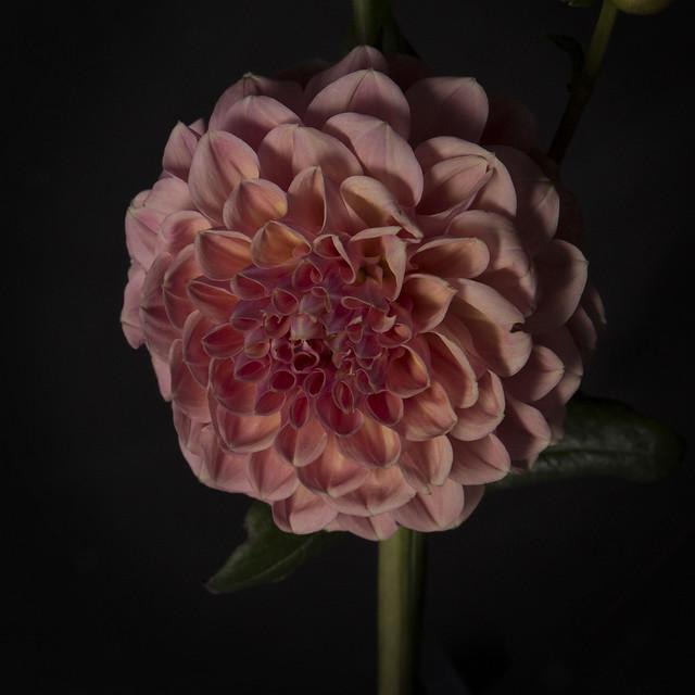 Flowers x Raver Ria