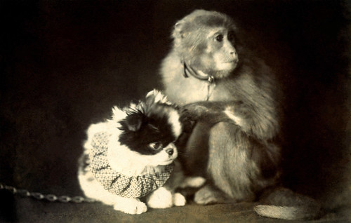 Chin Dog and Monkey 1915 | by Blue Ruin1