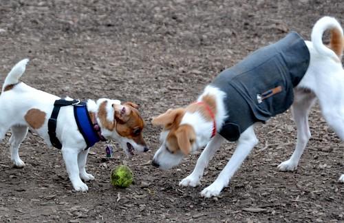 Dog Park-6